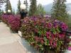 18 Banff Springs Hotel (14)
