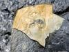 Trilobite Fossils, Stanley Glacier, Kootenay National Park