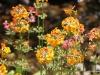 013 Betty Ford Garden 07-2015.