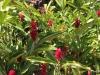 Dole Plantation , Oahu. Gardens