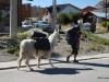 Trekker and his alpaca, El Chalten, Argentina