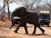 02 Elephants