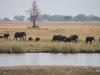 06 Elephants
