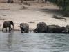 07 Elephants