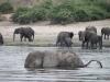 08 Elephants