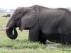 09 Elephants