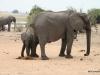 11 Elephants