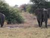 13 Elephants