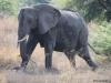 14 Elephants