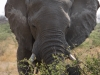 16 Elephants