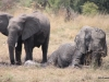17 Elephants