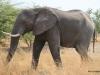 18 Elephants