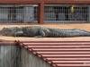 09  Gatorland 11-2015 (52)