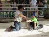 17 Gatorland 11-2015 (149) Gator wrestling