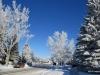 Hoar Frost, Calgary