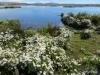 El Calafate, Laguna Nimez Nature Preserve. Wildflowers