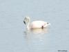 El Calafate, Laguna Nimez Nature Preserve. Flamingos