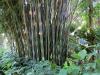 09 Leu Gardens, Orlando