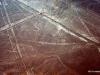 24 Nazca lines. spider