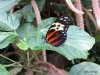 009 Niagara Butterfly Conservancy 7-2013