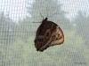 020 Niagara Butterfly Conservancy 7-2013