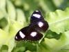 027 Niagara Butterfly Conservancy 7-2013