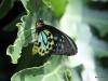 034 Niagara Butterfly Conservancy 7-2013