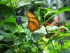 035 Niagara Butterfly Conservancy 7-2013