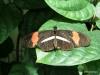 036 Niagara Butterfly Conservancy 7-2013