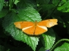 037 Niagara Butterfly Conservancy 7-2013