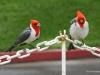 Cardinals at the USS Arizona Memorial