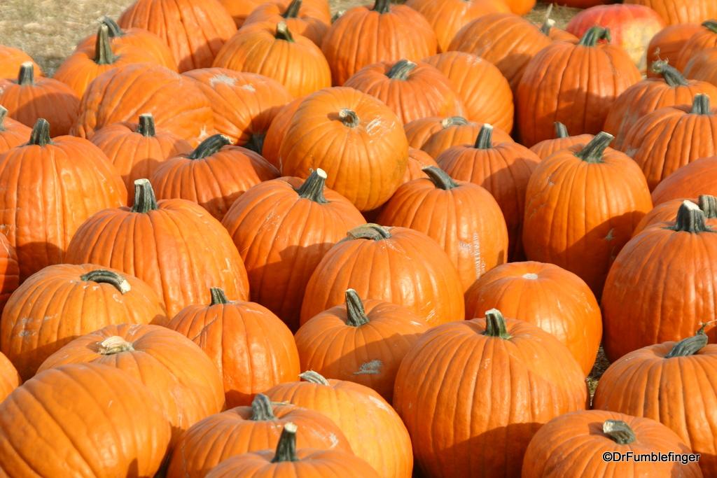 Fall 2008 004  Harvest Festival Green Bluff
