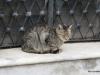 Buenos Aires Recoleta Cemetery 012 cat