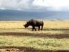 1999 Tanzania 015. Ngorongoro Crater. Black Rhino