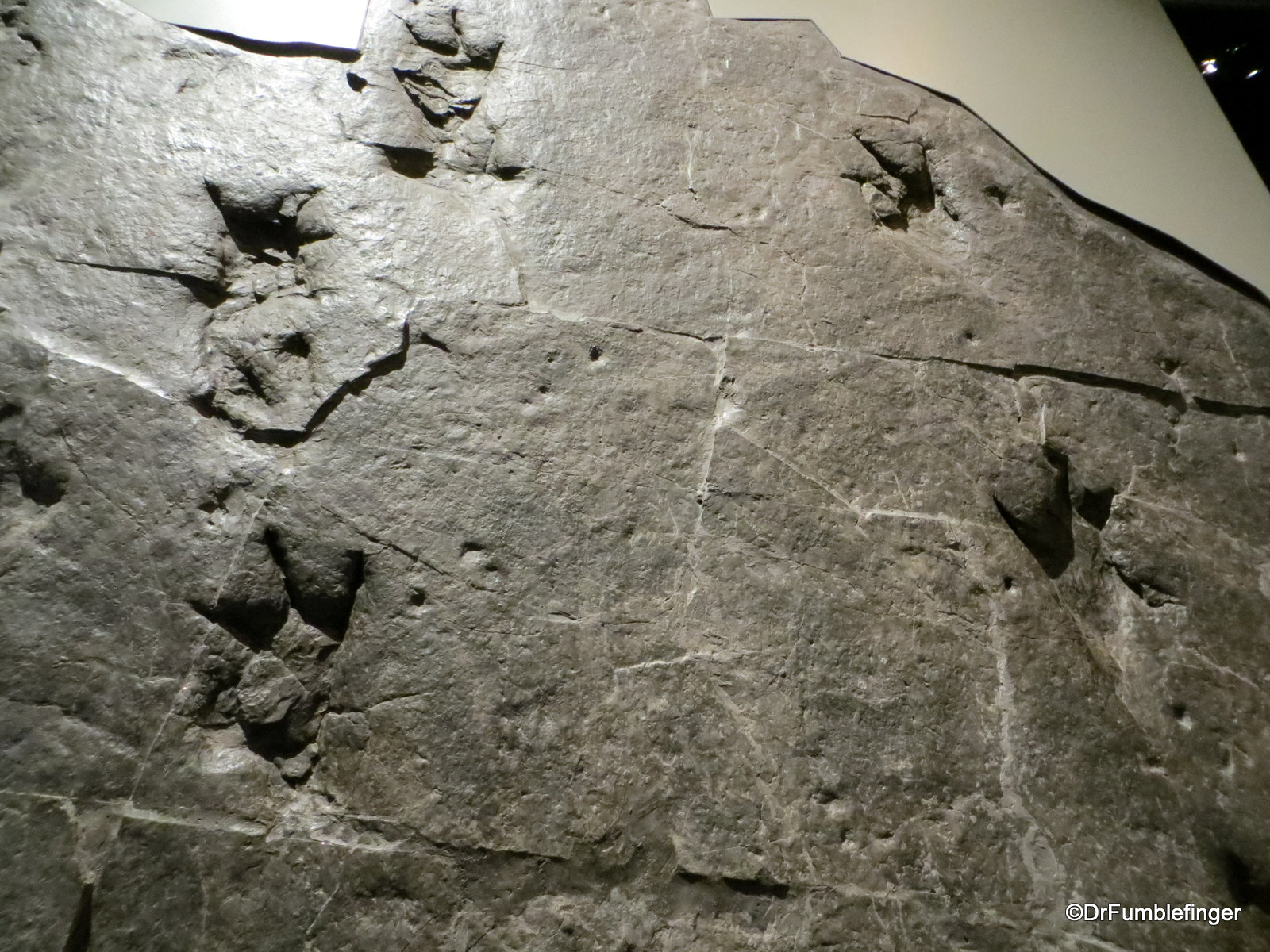 Dinosaur footprints, Royal Tyrrell Museum