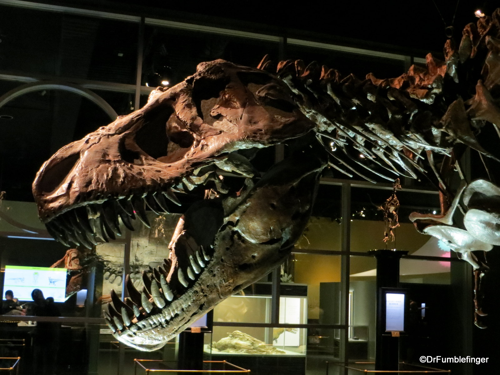 Royal Tyrrell Museum, Drumheller. Lords of the Land.. T Rex
