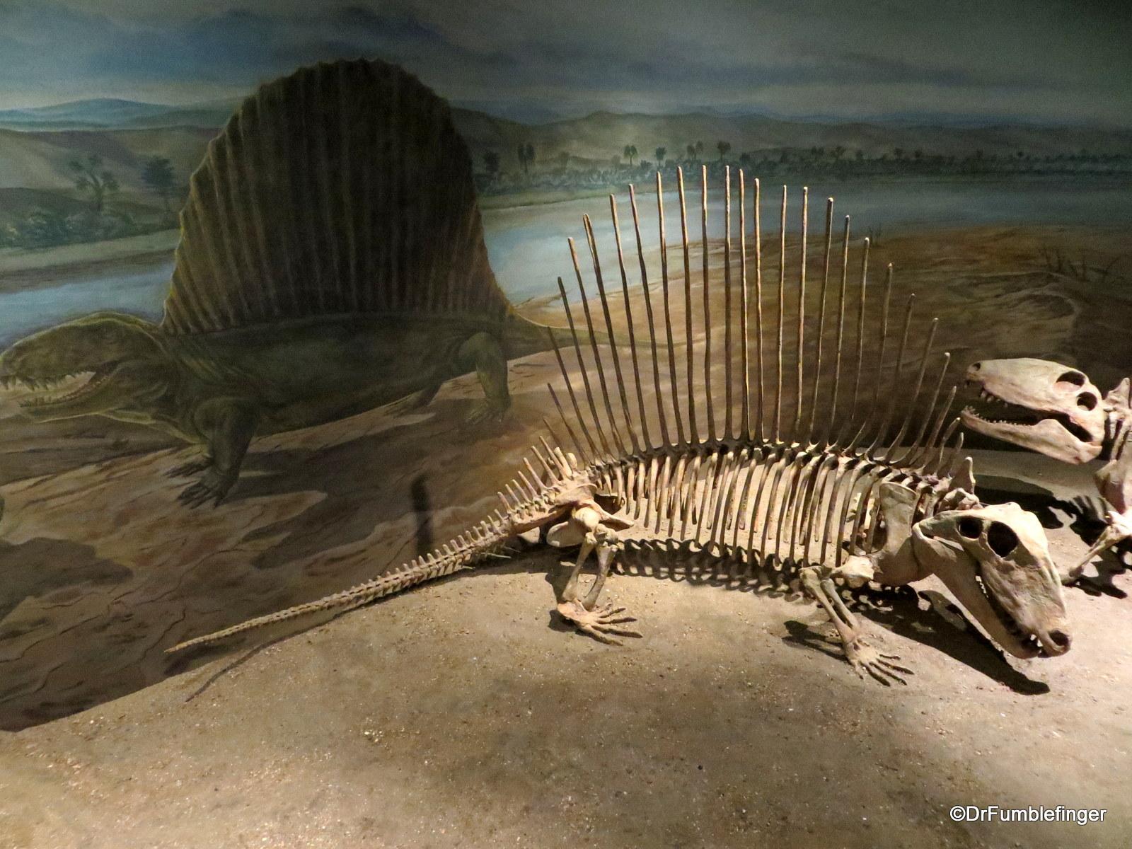 Dimetrodon, Royal Tyrrell Museum, Drumheller