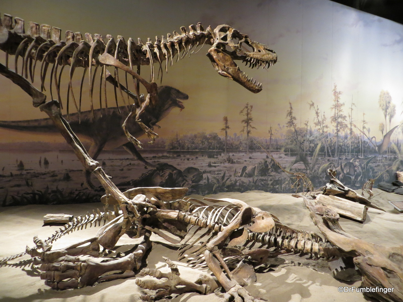Dome-headed dinosaurs, Dinosaur Hall, Royal Tyrrell Museum