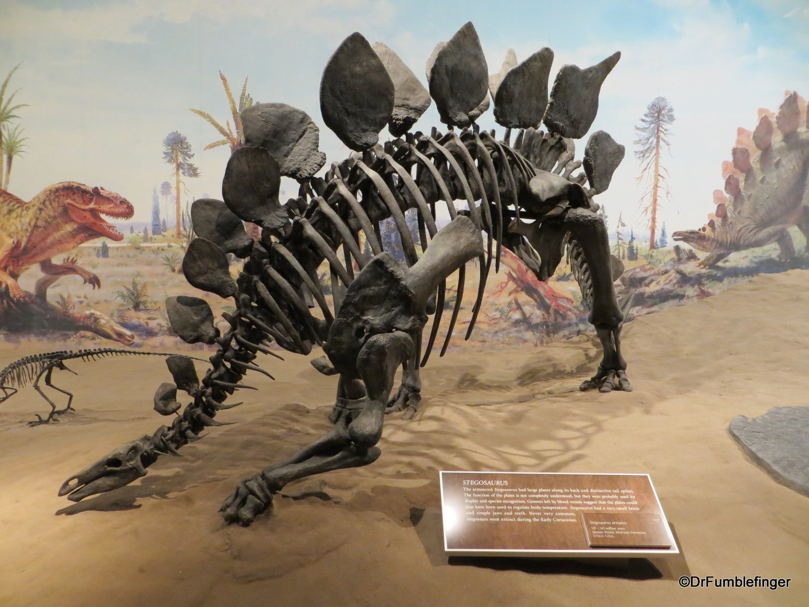 Stegosaurus, Dinosaur Hall, Royal Tyrrell Museum