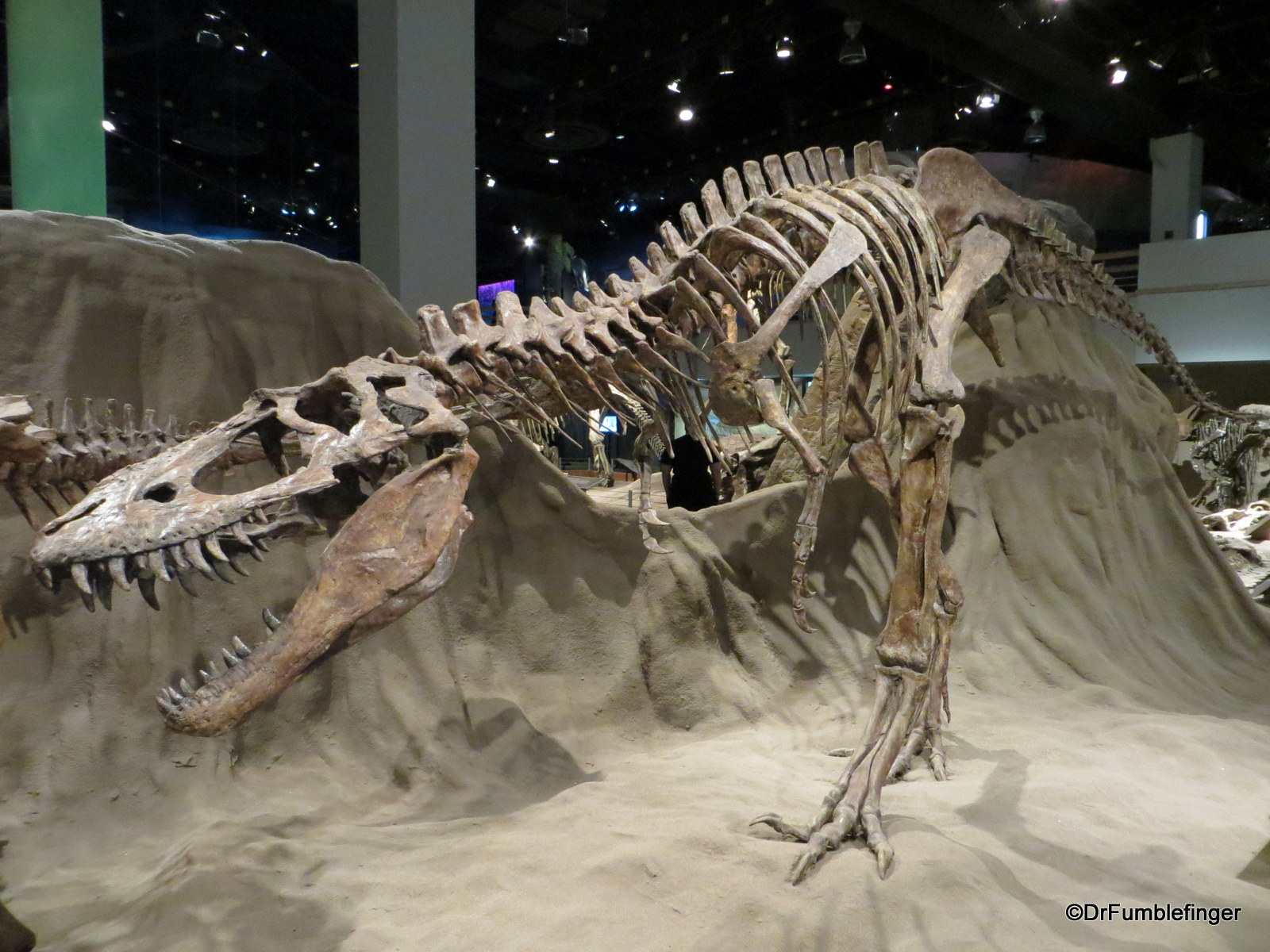 Albertosaurus, Dinosaur Hall, Royal Tyrrell Museum