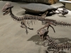 Dinosaur Hall, Royal Tyrrell Museum, Drumheller