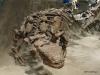 Euoplocephalus, Dinosaur Hall, Royal Tyrrell Museum
