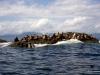 QCI Skeedans 2003 026 Seal Island