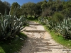 Path to the Doric Temple, Segesta, Sicily
