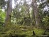 QCI Skeedans 2003 012 Louise Island Rainforest #2