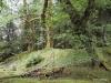 QCI Skeedans 2003 013 Louise Island Rainforest #3