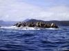 QCI Skeedans 2003 022 Seal Rock #6