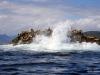QCI Skeedans 2003 025 Seal Island
