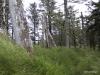 QCI Skeedans 2003 035 Skeedans #2