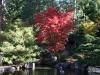 Fall 2008 023 Japanese Garden, Manito Park